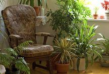 My fav Greens / Plants, succulents, cacti  / by Shelley Randles