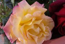 Flores y Plantas... / Jardines, Plantas de exterior e interior, Flores y otras cosas bonitas... / by Ana Asunción