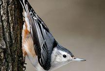 Birds / by Jane Schofield
