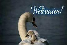 weltruste