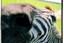 Animals! / Animals that GWC home. / by Global Wildlife Center