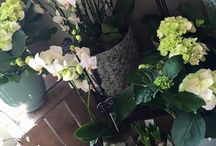 Moutan Flowers / Images from our florist shops in Hartley Wintney and Odiham