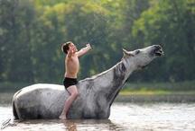 Fun Horse Photos