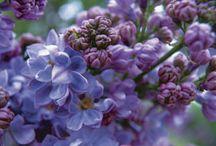Herbář / Jarní květiny