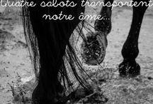 Les chevaux ma vie !