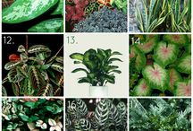 House plants / by Megan Born