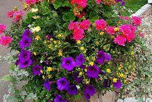 Gardening & Patios