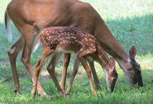 Wild animals / Photography hobby from ZeusCorner!
