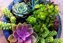 комнатные растения,цветы