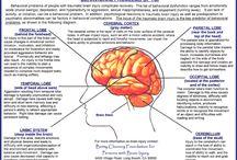 Acquired traumatic brain damage - thalamus - recovery