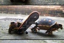 Turtle obsession / by Ashley Wilson