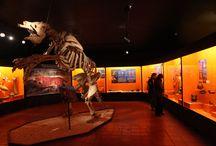 Museo de Colchagua / El Museo de Colchagua, posee la colección privada más importante de Latinoamérica.