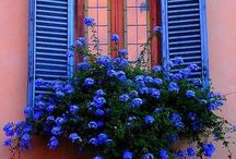Fleurs en jardinière