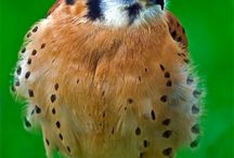 All about animals / This bird is so cute