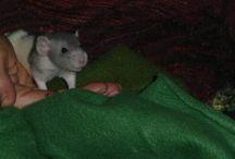 Dumbo Ratties