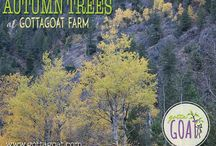 Farm Pictures / Pictures of GottaGoat Farm.