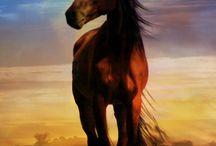 HORSES ♞