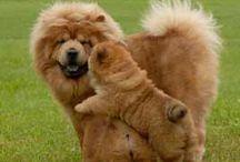 Cani dolcissimi