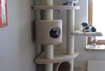 Cat Playground