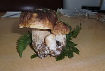 mushrooms / by Roberto Cavaterra