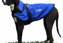 Places to buy The Rein Coat