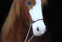 -- Horses --