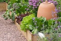 Jardin, Flores e Frutos