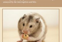 Pets_ rats hamsters dogs cats and more