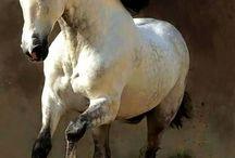Hest /helfigur