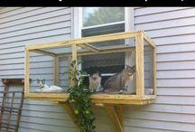 Creative Stuff for Kitties