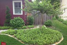 Minneapolis Gardening Projects / Gardening projects in the Twin Cities area that I have worked on.