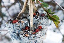 Oppskrifter å lage fuglemat