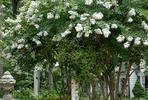 ogród biały 1