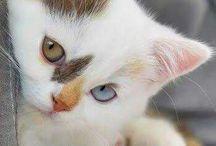 Katzen Cats Kitten