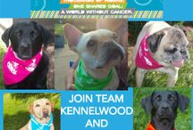 Bark the Cause with Team Kennelwood / by Kennelwood Pet Resorts