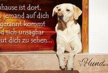 Hund, Tiere