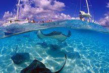 mantas and the sea