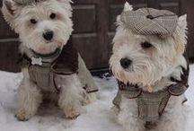 hunde tøj