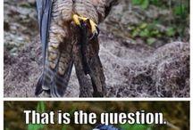 Funny Animals Memes