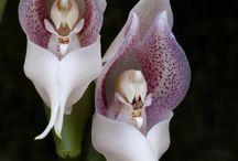 orquídea impressionante