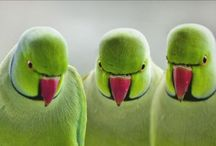 Birds / song birds are my favorite, but wow there are some amazing colored birds too... & odd... & funny ♥  / by Twila Simonson