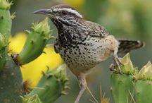 Wildlife: Birds
