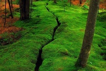 Moss / by Sylvia Taylor