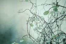 grün Fotografie
