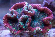 Akwarystyka Morska CoralHouse / Opis ciekawych zwierząt akwarystyki morskiej.