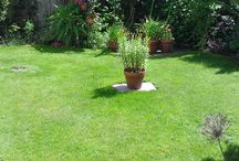 Lawn Care / Tips, pictures and inspiration on all things lawn care.