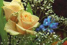 KWIATY / Kwiaty całego świata.
