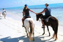 Things to do Cayo Coco Cuba / Some of the most interesting tours and excursions from Cayo Coco in Cuba with photos and descriptions at the exclusive Cayo Coco travel website. All About Cayo Coco.