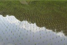 Fields Araziler