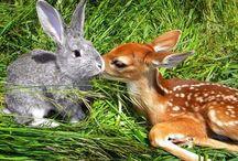 Schattig en dieren